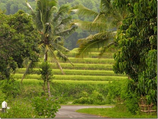 Дорога петляет серой змеей в яркой сочной зелени