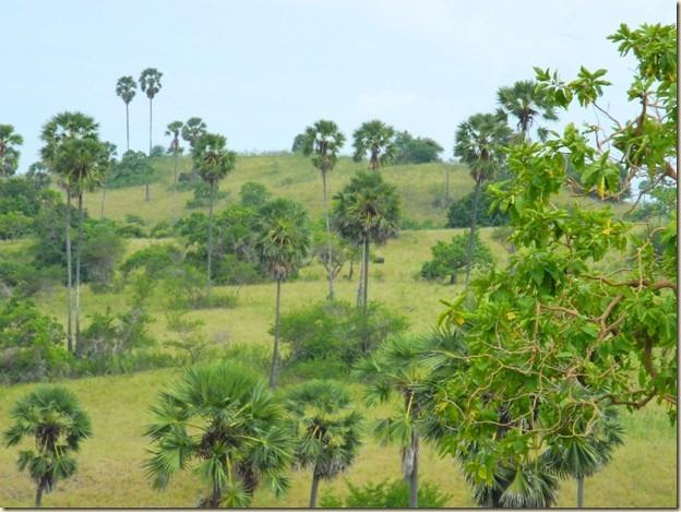 Савана острова Ринка