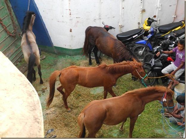Сумбские лошади