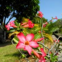 bali_september_2012 (36)