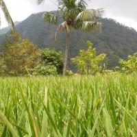 bali_september_2012 (61)