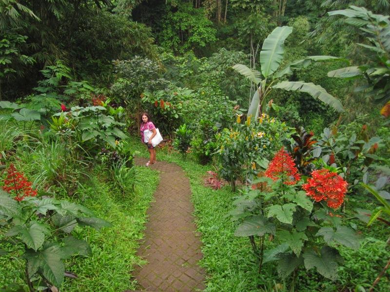 дорожка в джунглях