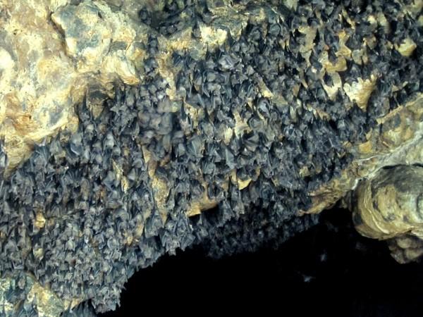 Мерзкая пещера
