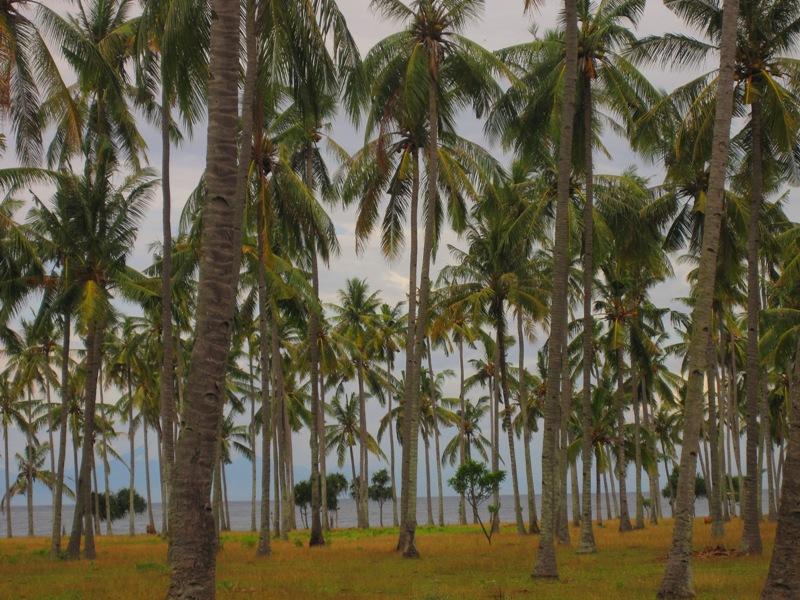 пальмы Ломбока