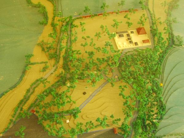 План-макет обезьяньего леса