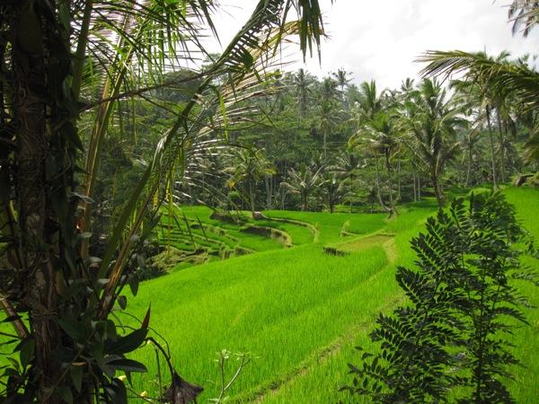 Рисовые террасы Gunung Kawi