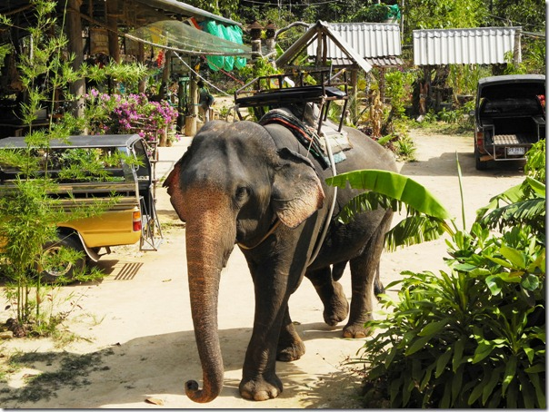 кочанговские слоны