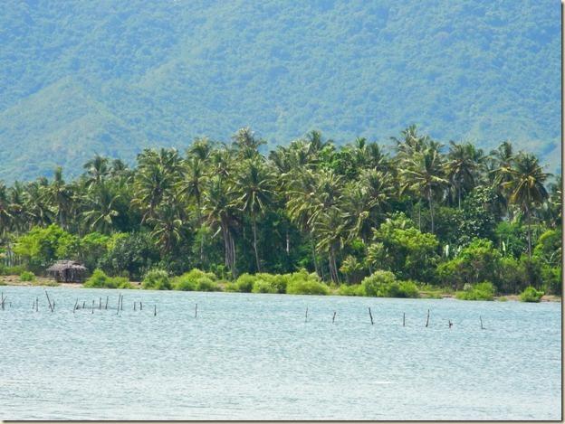 Пальмы на побережье Бима Бэй