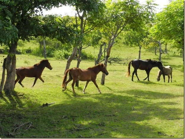 Лошади Сумбавы