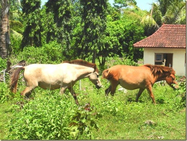Сумбавские лошади