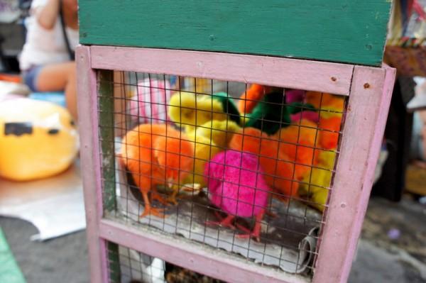 Издеваются, как могут над бедными животными